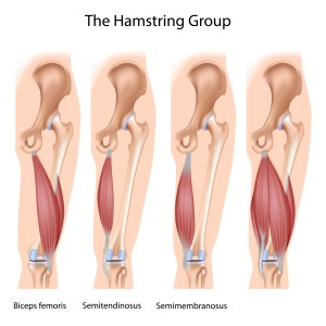 {Hamstrings Semitendinosus and semimembranosus Biceps Femoris}