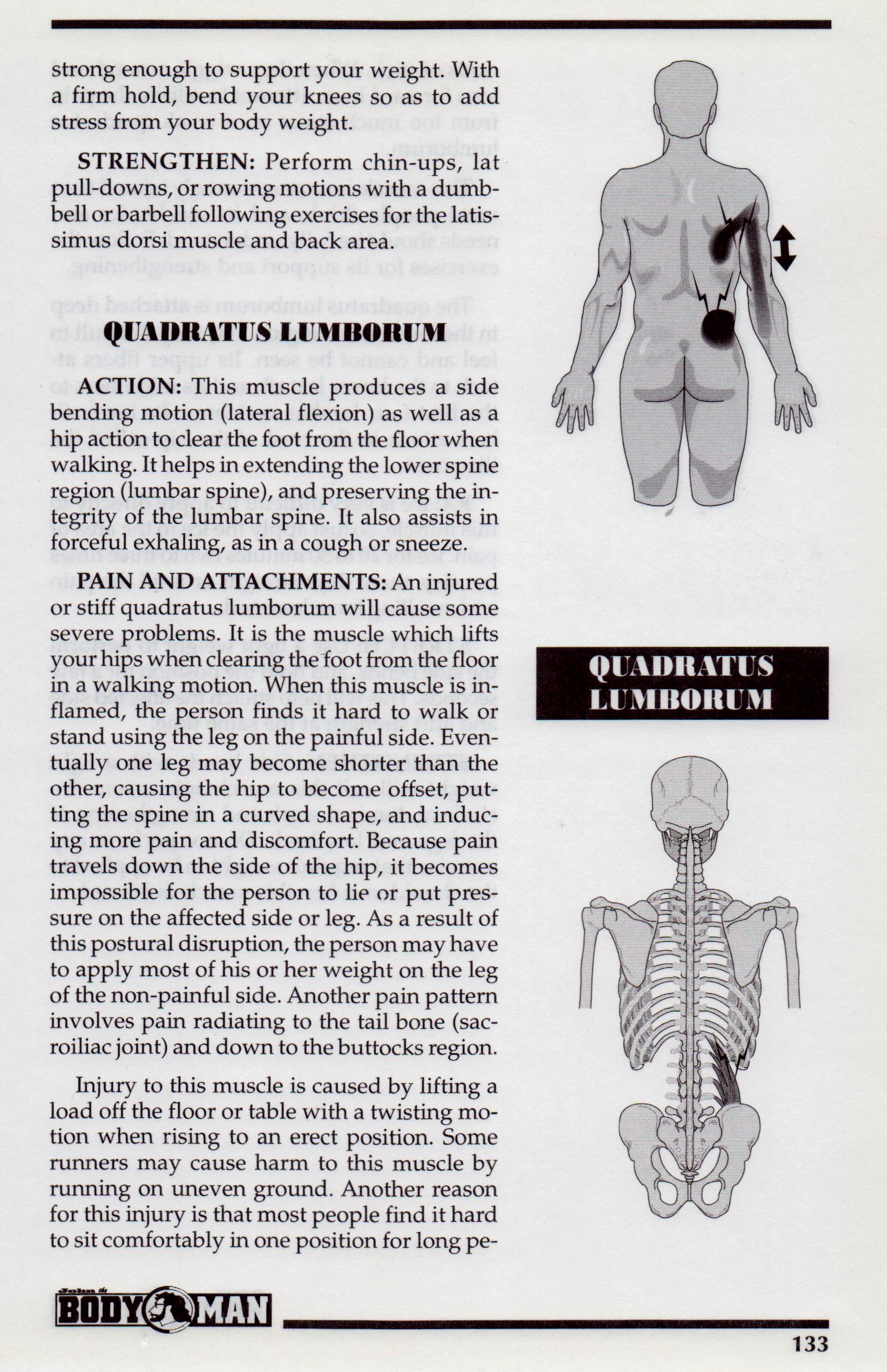 {Quadratus Lumborum P 133}