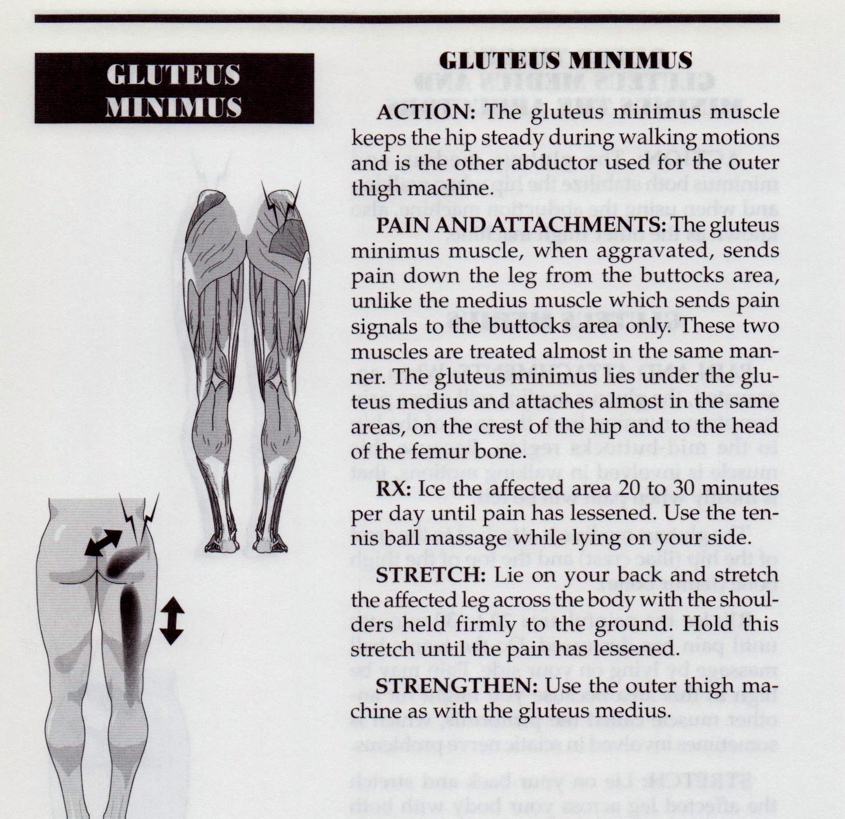 {Gluteus Minimus p146}