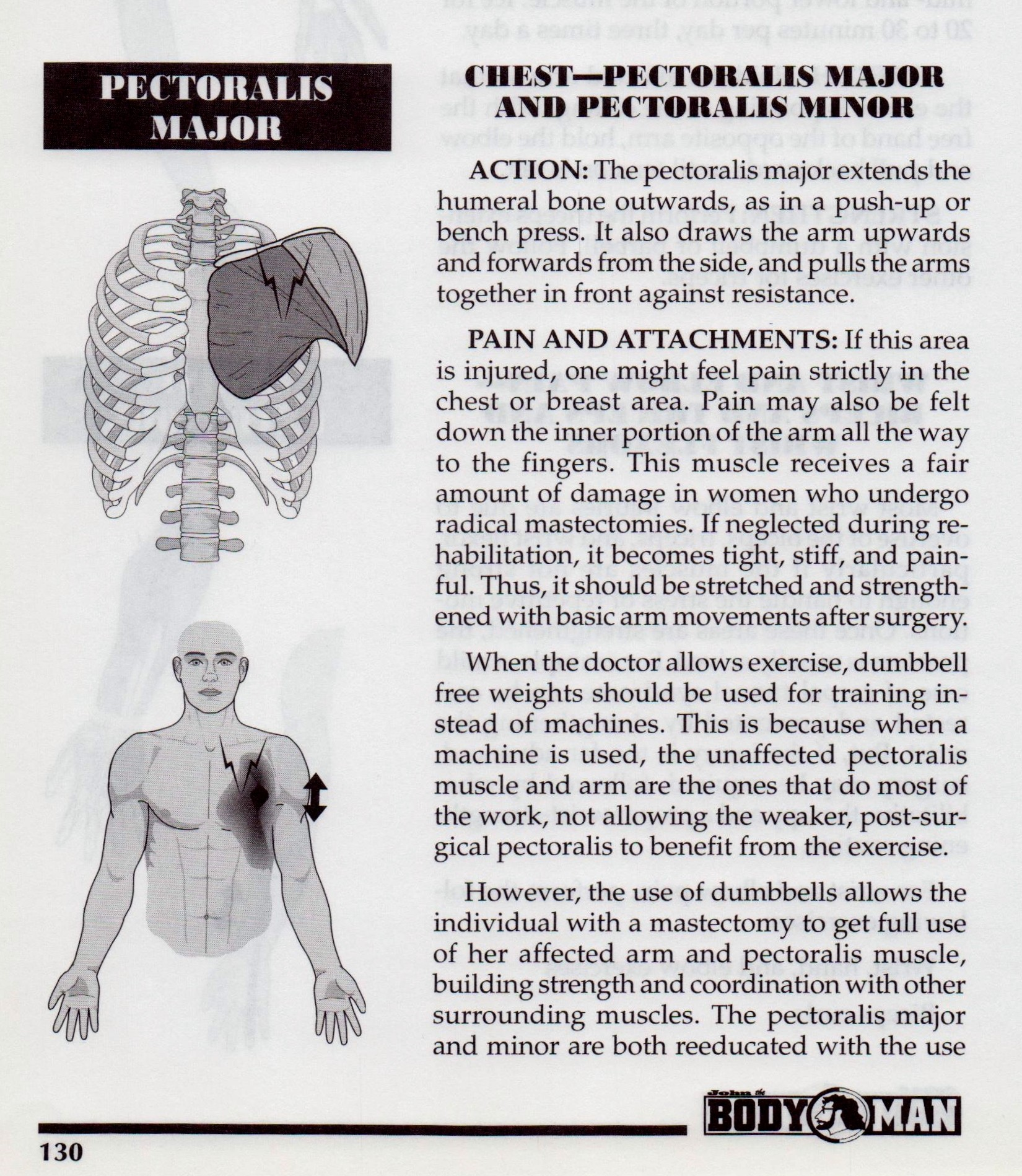 {Pectoralis Major and Minor p130}