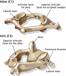 {Top Cervical Vertebrae C1 & C2}