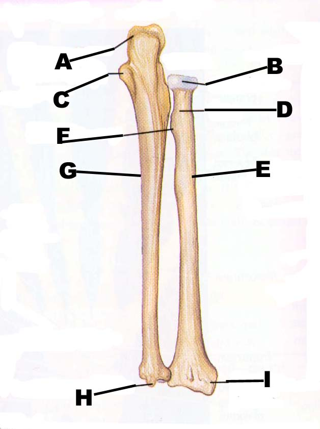 Humerus Bone | John The Bodyman Fitness Academy