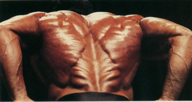 {Erector Spinae from Samir Bannout bodybuilder}
