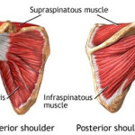 {Rotator Cuff moves for the SITS muscles}